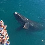 Top Things to Do in Puerto Madryn, Whale watching