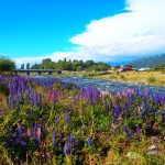 Best Day Trips Outside Bariloche, El Bolson